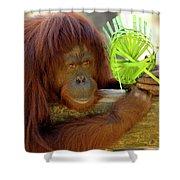 Orangutan Shower Curtain by Carolyn Marshall