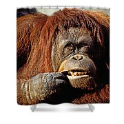 Orangutan  Shower Curtain