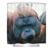 Orangutan Kiss Shower Curtain