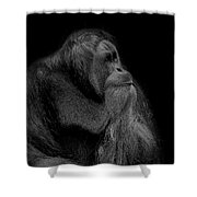 Orangutan Male Looking Up Shower Curtain