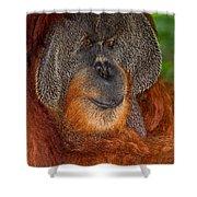 Orangutan Male Shower Curtain