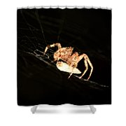 Orb Spider Shower Curtain
