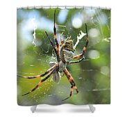 Orb Weaver Spider And Prey In A Web Shower Curtain