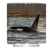 Orca #3 Shower Curtain