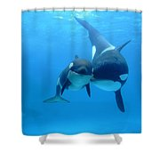 Orca Orcinus Orca Mother And Newborn Shower Curtain by Hiroya Minakuchi