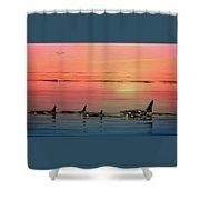 Orca Sunset Shower Curtain