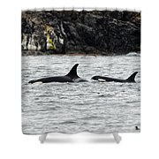 Orcas In The Salish Sea Shower Curtain