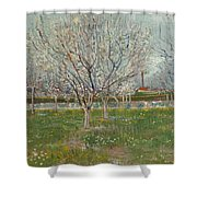 Orchard In Blossom Plum Trees Shower Curtain