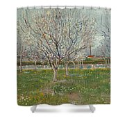 Orchard In Blossom, Plum Trees Shower Curtain