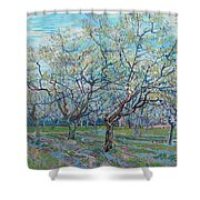 Orchard With Blossoming Plum Trees   Shower Curtain