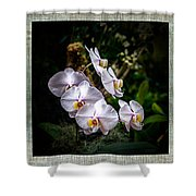Orchid 1 Triptych Shower Curtain