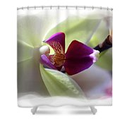 Orchid 2 Shower Curtain