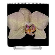 Orchid 2016 2 Shower Curtain