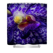 Orchid 2160tg Shower Curtain