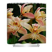 Orchid 255 Shower Curtain
