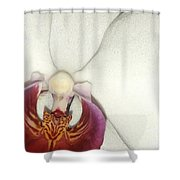 Orchid-3 Shower Curtain