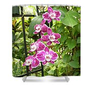 Orchid #4 Shower Curtain