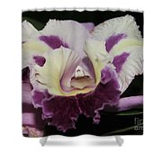 Orchid 87 Shower Curtain