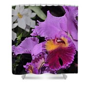 orchid 942 Purple Brassolaeliocattleya  Shower Curtain