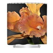 orchid 955 Orange Brassolaeliocattleya Shower Curtain