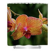Orchid Aliveness Shower Curtain