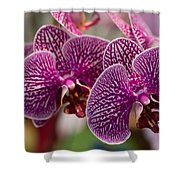 Orchid Ascda Laksi Shower Curtain
