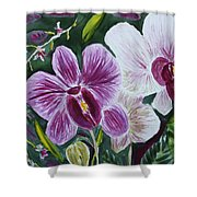 Orchid At Aos 2010 Shower Curtain