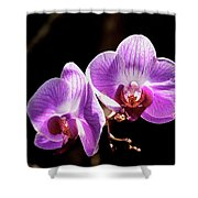 Orchid At Fairchild Gardens Shower Curtain