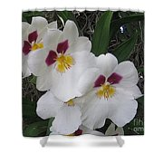Orchid Beauties Shower Curtain