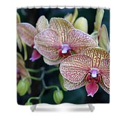 Orchid Beauty Shower Curtain