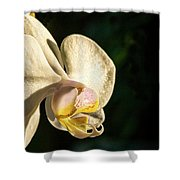 Orchid Bloom Shower Curtain