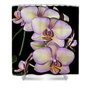 Orchid Blossoms I Shower Curtain