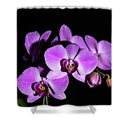 Orchid Blossoms IIi Shower Curtain