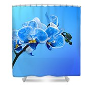 Orchid Blue Shower Curtain