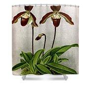 Orchid, C. Oenanthum Superbum, 1891 Shower Curtain