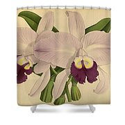 Orchid Venezula Shower Curtain