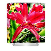 Orchid Cattlianthe Hybrid Shower Curtain