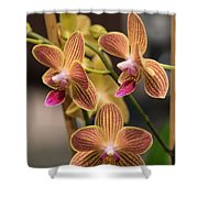 Orchid Chingruey's Goldstaff Shower Curtain