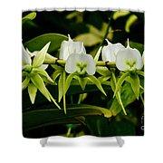 Orchid Choir Shower Curtain