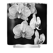 Orchid Cluster Close-up Shower Curtain