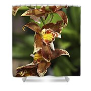 Orchid Curve Shower Curtain