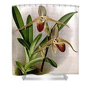 Orchid, Cypripedium Elliottianum, 1891 Shower Curtain
