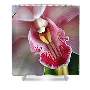 Orchid Dust Shower Curtain