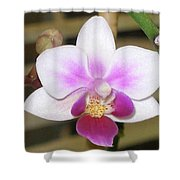 Orchid Explosion Shower Curtain