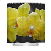 Orchid Family Shower Curtain