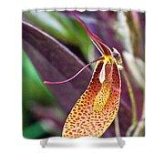 Orchid Flower - Restrepia Radulifera Shower Curtain