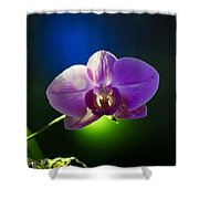 Orchid Flower On Black Background Shower Curtain