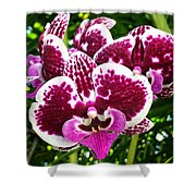 Orchid Hanging In Palms Shower Curtain