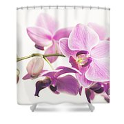 orchid II Shower Curtain