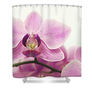 orchid III Shower Curtain